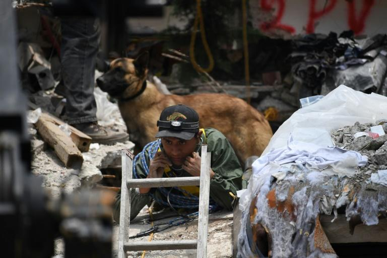 A sniffer dog stands behind a rescue worker taking part in the search for quake survivors in Mexico City