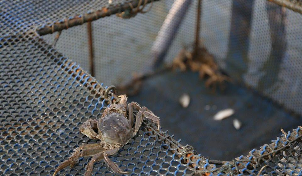 Hairy crabs from farms on Yangcheng Lake in China are thought to be of especially high quality. Photo: SCMP