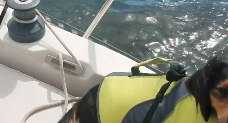 Sarasota Florida US dog survives falling overboard in storm.