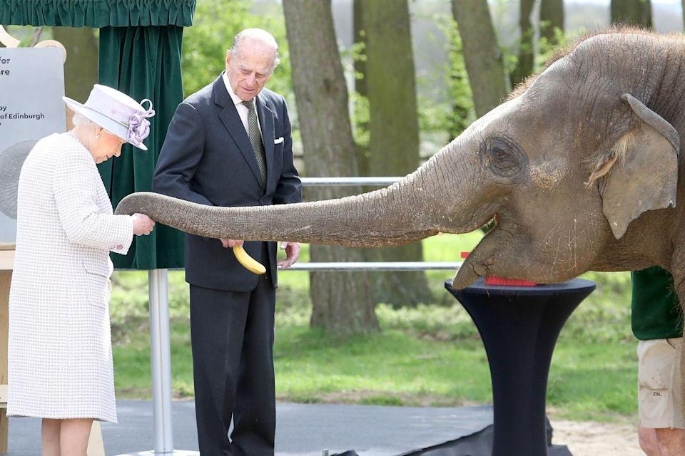 <p>They feed an elephant at a zoo in Dunstable, United Kingdom. </p>