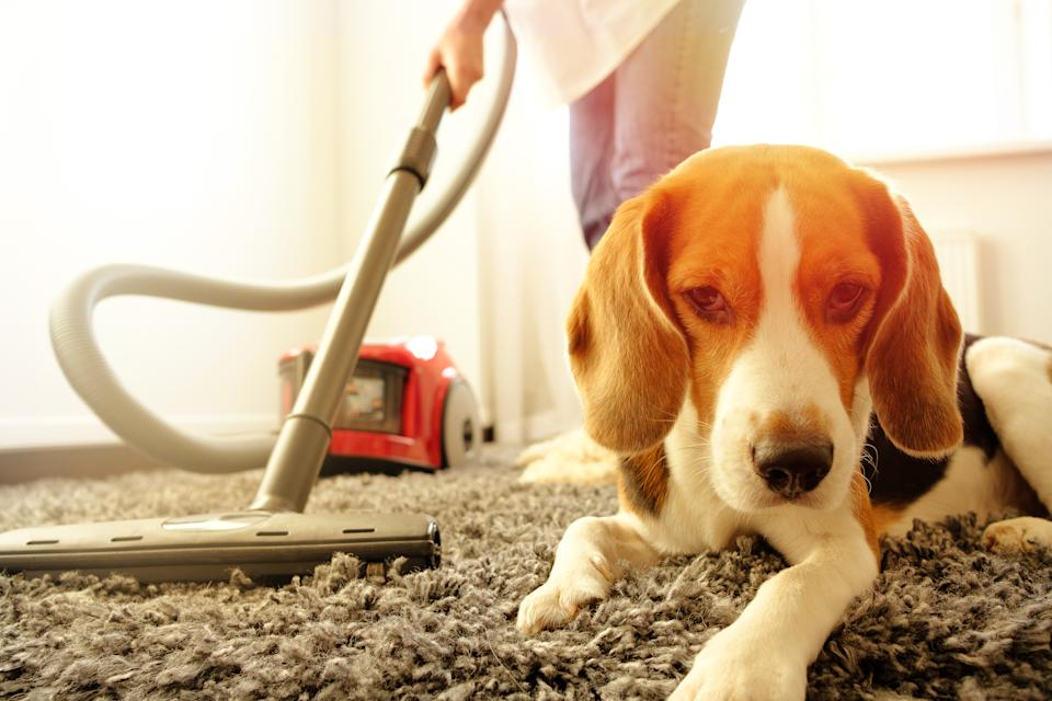 Can't get pet hair up from the carpet with a vacuum cleaner? This hack could help