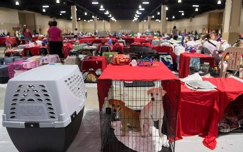 Dogs sit inside their cages as hundreds of people gather in a pet-friendly emergency shelter at the Miami-Dade County - Credit: Saul Loeb/AFP