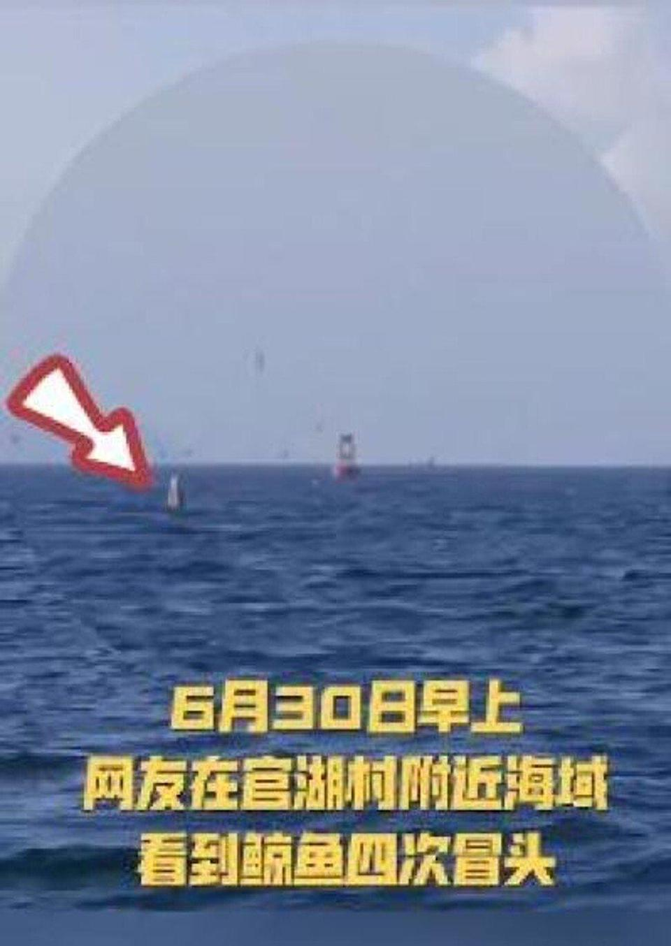 Shenzhen residents said they saw the whale close to the coast in the Dapeng district. Photo: Baidu