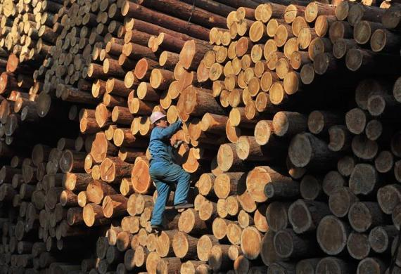 A worker climbs on piles of logs at a timber storage in Shenyang, Liaoning province April 15, 2010.