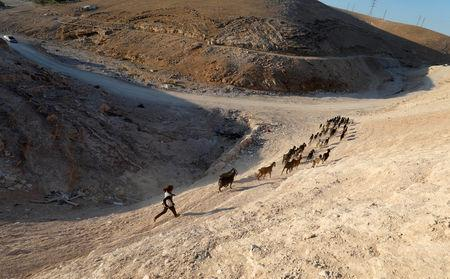 A Palestinian girl herds animals in the Palestinian Bedouin village of Khan al-Ahmar that Israel plans to demolish, in the occupied West Bank September 11, 2018. REUTERS/Mohamad Torokman