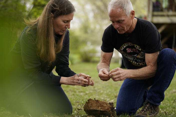 """University of Maryland entomologists Michael Raupp and Paula Shrewsbury sift through a shovel of dirt to pick out cicada nymphs in a suburban backyard in Columbia, Md., Tuesday, April 13, 2021. """"You've got a creature that spends 17 years in a COVID-like existence, isolated underground sucking on plant sap, right? In the 17th year these teenagers are going to come out of the earth by the billions if not trillions. They're going to try to best everything on the planet that wants to eat them during this critical period of the nighttime when they're just trying to grow up, they're just trying to be adults, shed that skin, get their wings, go up into the treetops, escape their predators,"""" Raupp says. (AP Photo/Carolyn Kaster)"""
