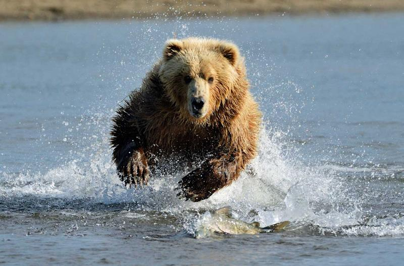 Investors, Stop Worrying About a Bear Market