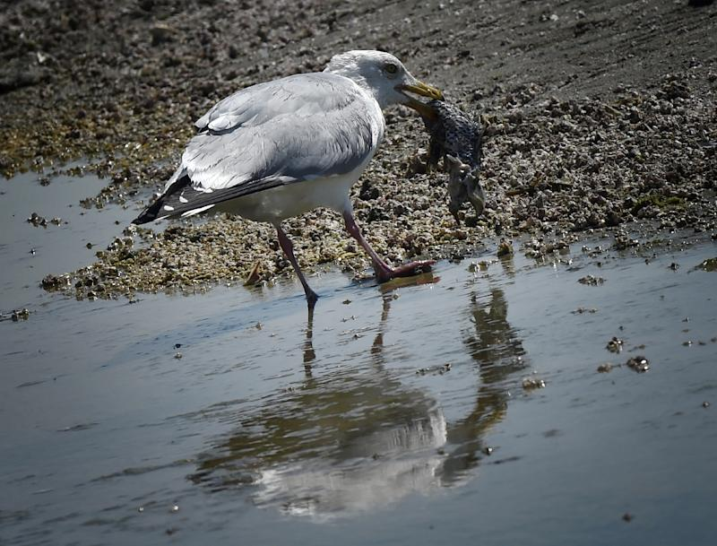Most seabirds have plastic in their stomachs after mistaking the waste material in the oceans for food