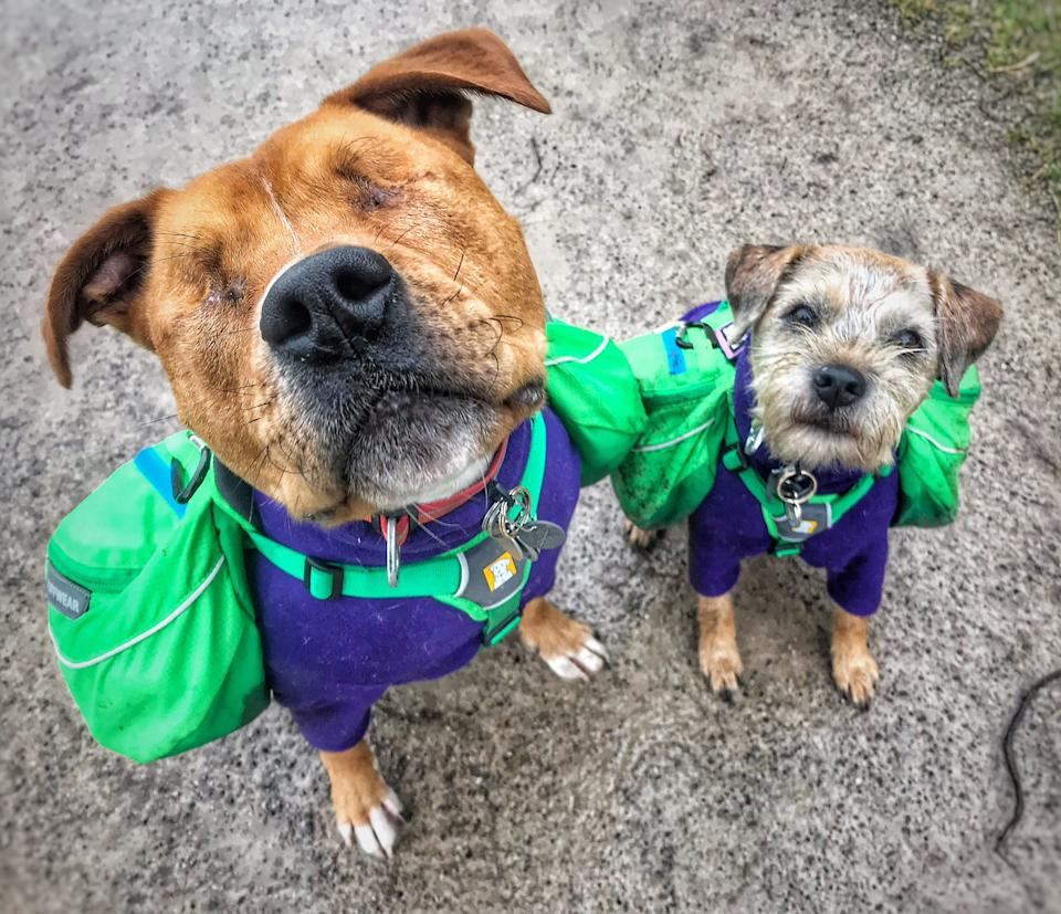 Amos with his border terrier best friend Toby. Source: Caters