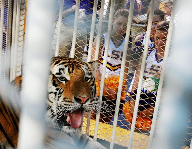 Mike VI was 11 years old