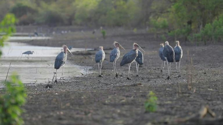 Wildlife thrives in Sudan's natural reserve amid mounting violations