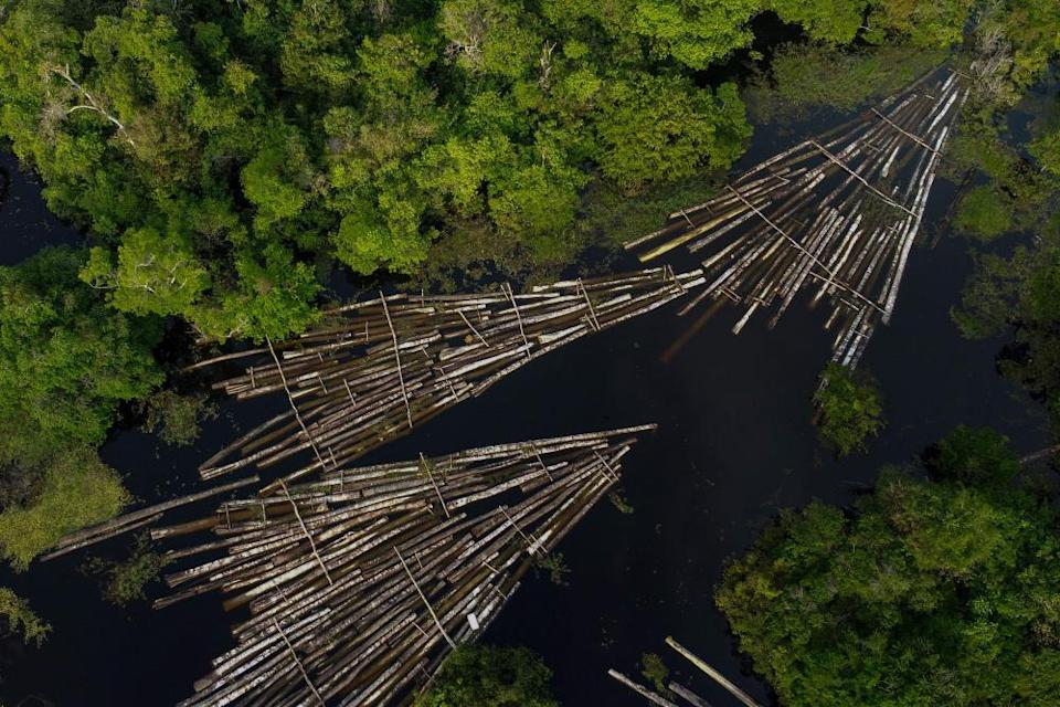 Wood cut from the Amazon rainforest by illegal loggers.