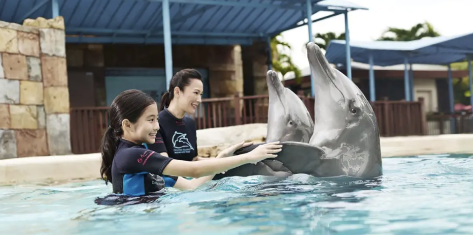PHOTO: Trip.com. Dolphin Discovery Programme