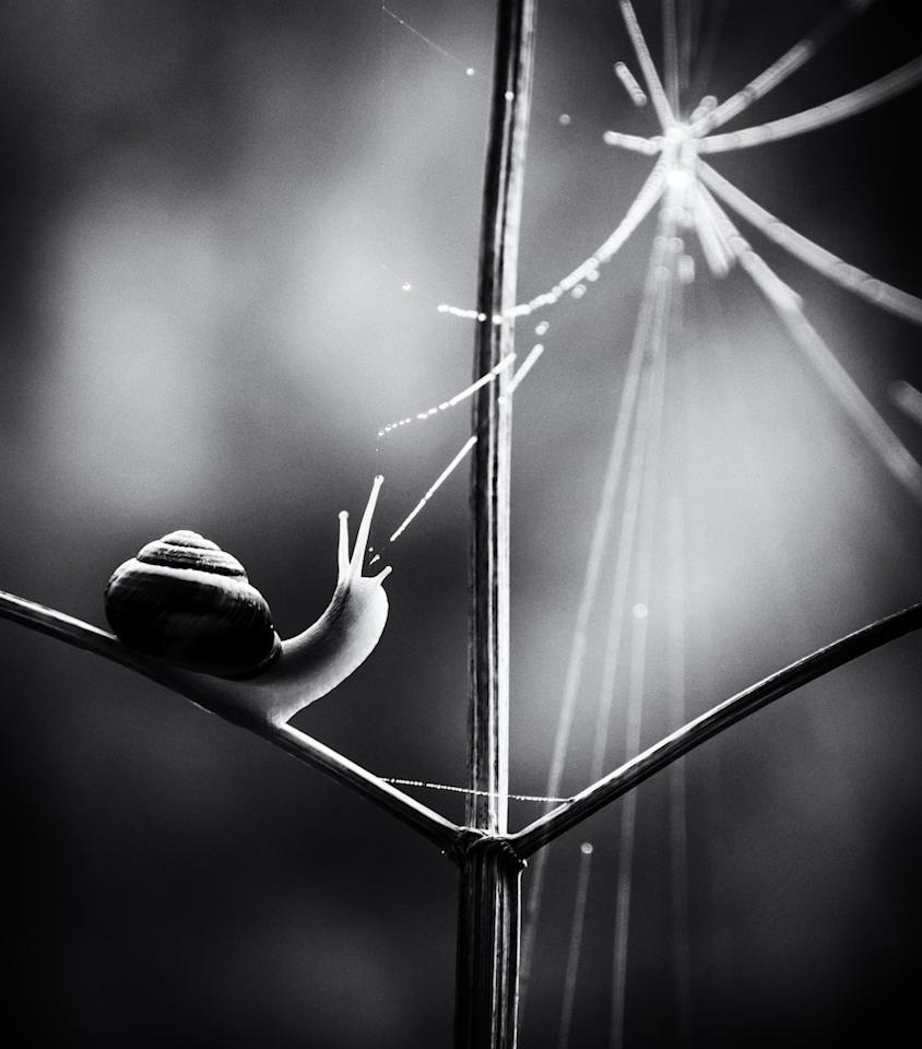 "<p>Winner of the Black and White category was Paula Cooper with this image, dubbed Web of Life, of a Brown-lipped snail taken in Thetford Forest, Norfolk. [Picture: Paula Cooper/<a rel=""nofollow"" href=""http://www.bwpawards.org"">www.bwpawards.org</a>] </p>"