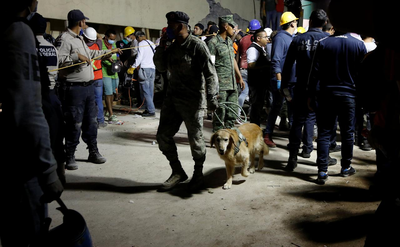 <p>A rescue worker walks with a sniffer dog during a floodlit search for students at Enrique Rebsamen school in Mexico City, Mexico on Sept. 19, 2017. (Photo: Carlos Jasso/Reuters) </p>