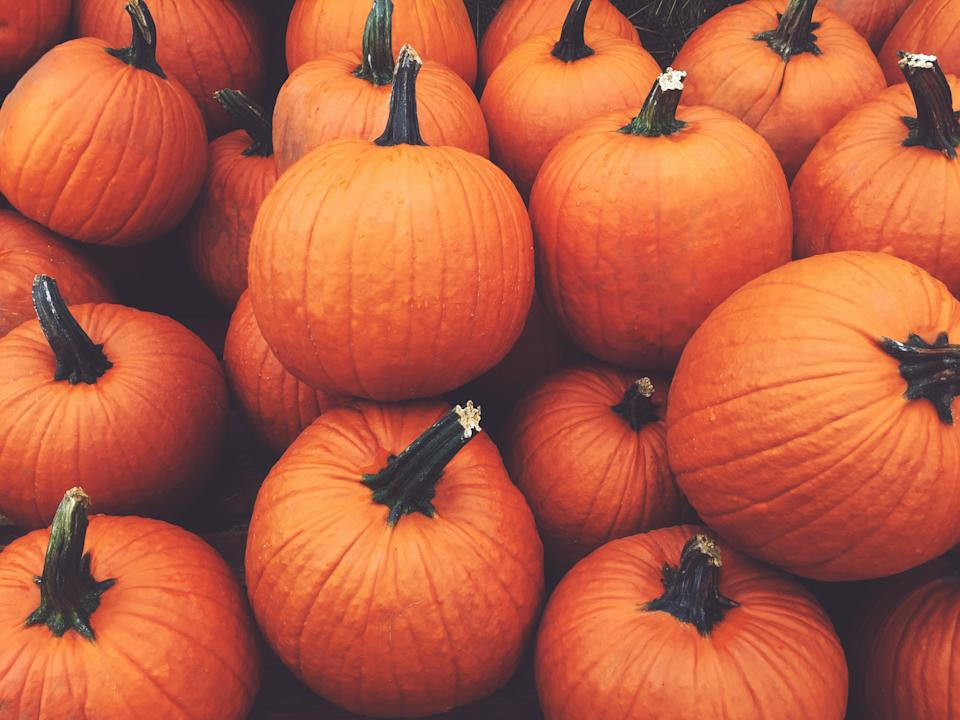Pile of Fall Harvest Pumpkins Halloween and Thanksgiving Holiday Background
