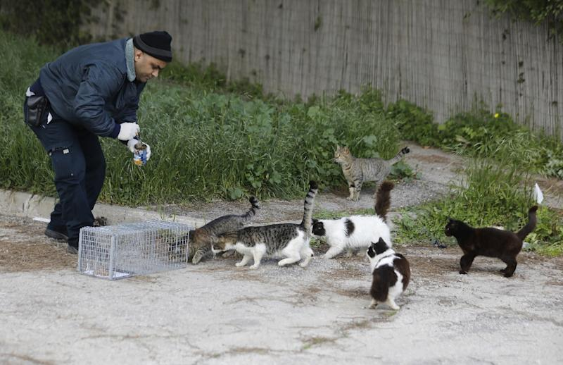 The concentration of stray cats in Jerusalem is among the highest in the Middle East or even the world, experts say (AFP Photo/MENAHEM KAHANA)