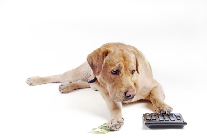 Dog counting cash money with a calculator.