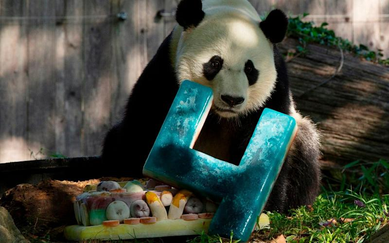 Bei Bei is set to move to China after turning four years old - AFP