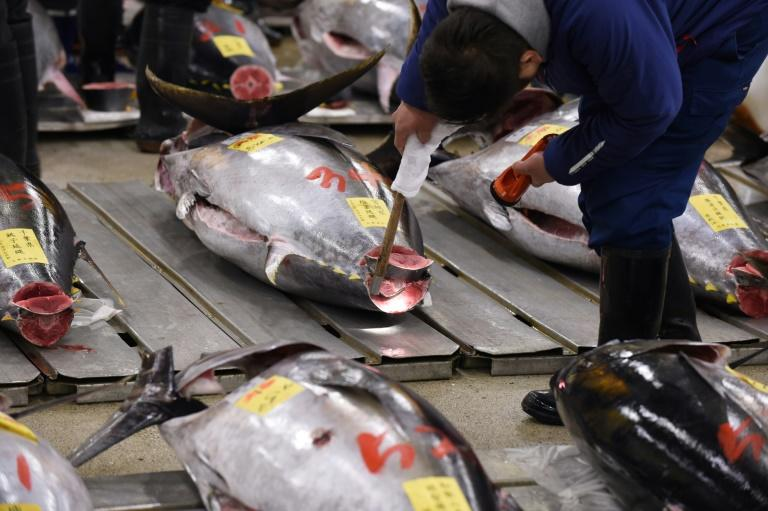 Bluefin tuna is usually found in the western and eastern Atlantic Ocean and the Mediterranean Sea (AFP Photo/Kazuhiro NOGI)