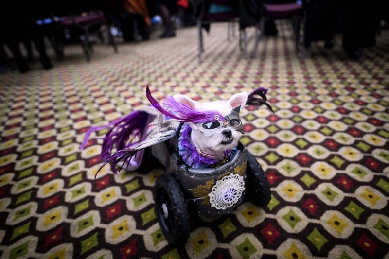 It's Pawsome! All pictures from New York Pet Fashion Show 2019