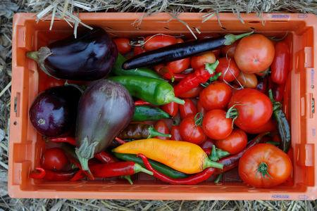 A box of vegetables is displayed at a 900 square meters farm garden on the rooftop of a postal sorting center, as part of a project by Facteur Graine (Seed Postman) association to transform a city rooftop as a vegetable garden to grow fruits, vegetables, aromatic and medicinal plants, with also chickens and bees in Paris, France, September 22, 2017. Picture taken September 22, 2017.  REUTERS/Charles Platiau