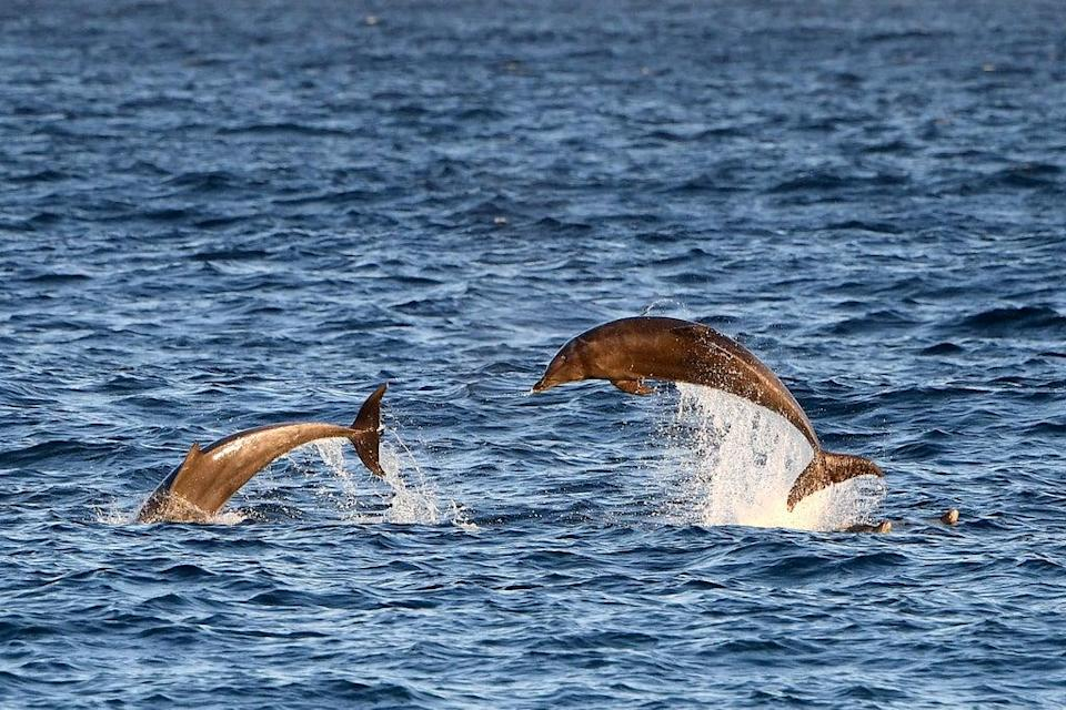 Dolphins (AFP via Getty Images)