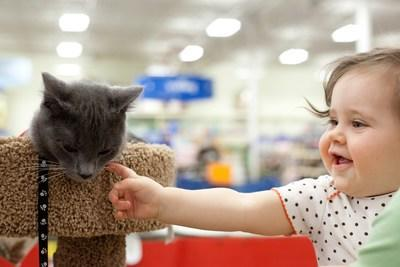 An adoptable cat in PetSmart's Adoption Centre meets a potential family (CNW Group/PetSmart Charities of Canada)