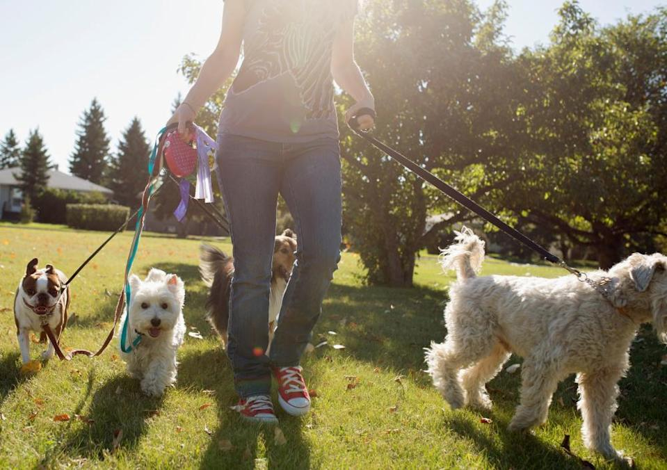 Woman walks dogs in sunny park