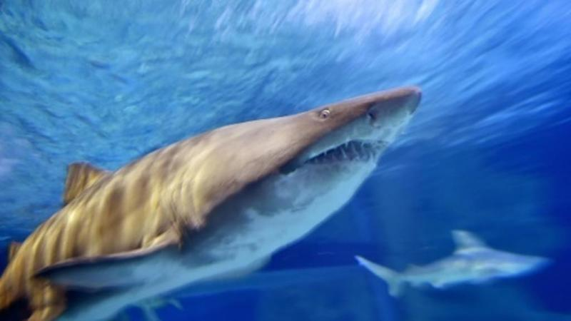 Half a million sharks may be killed to produce global Covid-19 vaccine