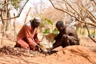 Sawadogo, a farmer, plants a tree in Ouahigouya