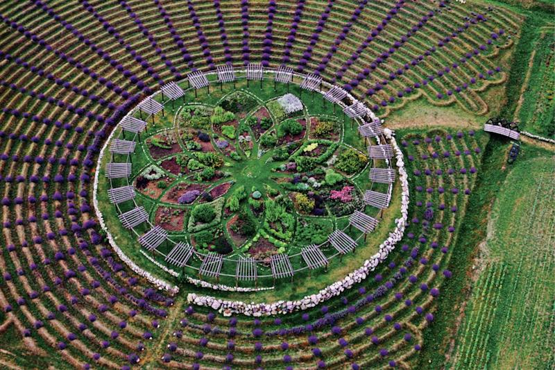 The Lavender Labyrinth at Cherry Point Farm in Shelby, Michigan, is so big that it can be seen on Google Earth.
