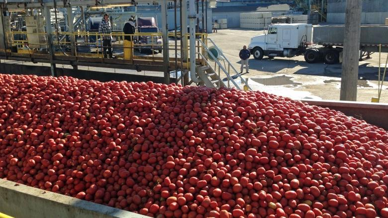 Ontario tomato farmers angry over 'horrible' pricing deal
