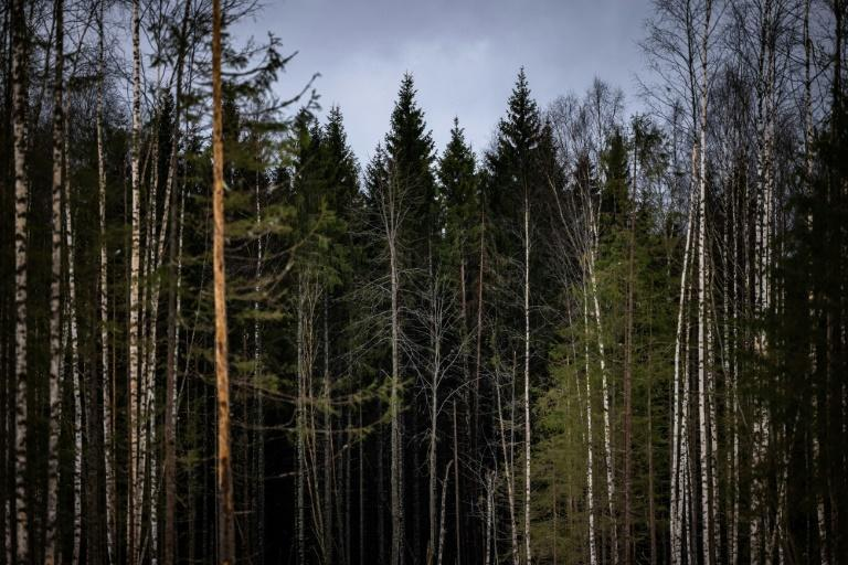 Russia's timber industry could improve its environmental image as wood is a much greener construction material than concrete, which releases lots of carbon into the atmosphere during its production.