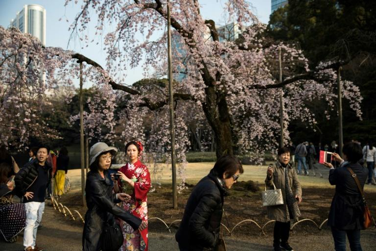 Visitors gather under cherry blossoms in a park in Tokyo