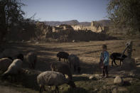 A boy stands with his flock of sheep at a village in Wardak province, Afghanistan, Monday, Oct. 11, 2021. (AP Photo/Felipe Dana)