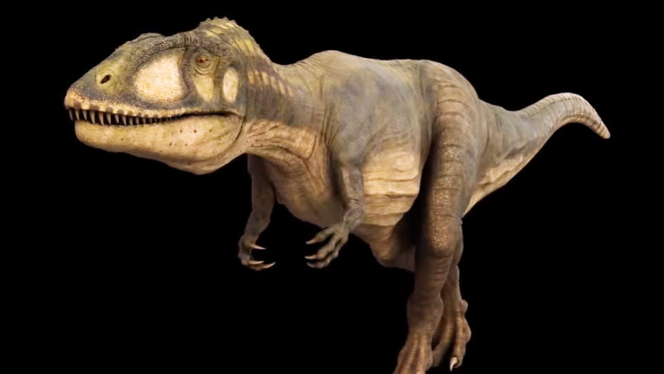 A digital visualization of carcharodontosaurus, a 23-foot-long, one-ton dinosaur that looks like a shorter, slimmer T. rex.