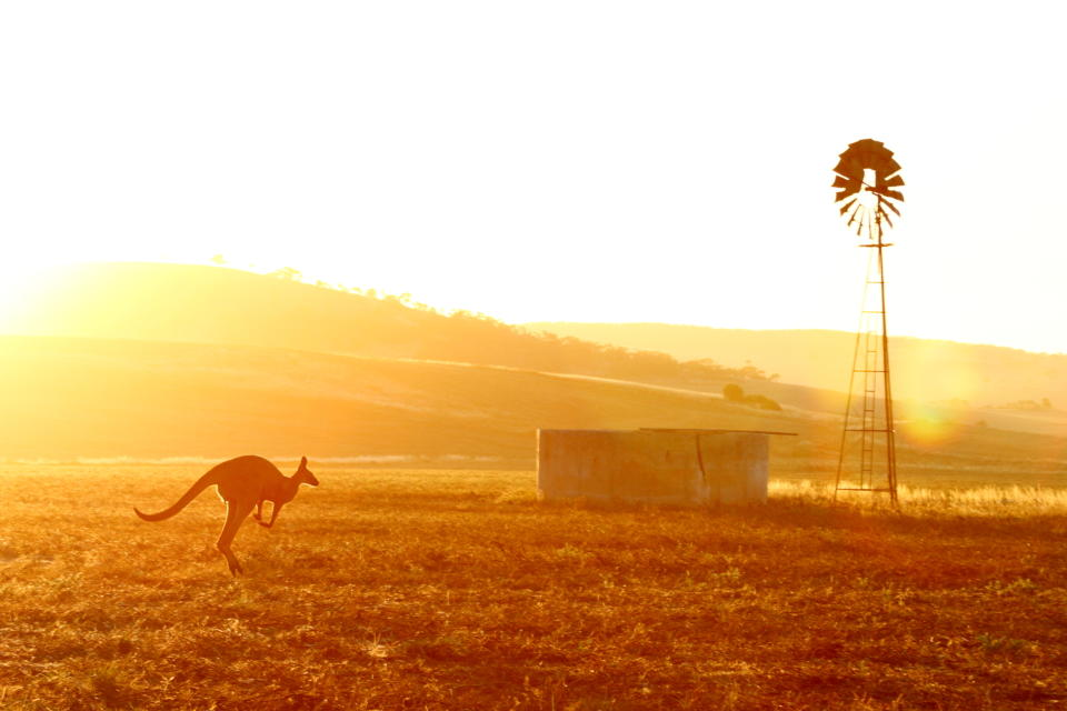 A kangaroo hops across grass in Australia. The UN has urged leaders to follow through on tackling a pair of pressing problems: climate change and dwindling biodiversity.