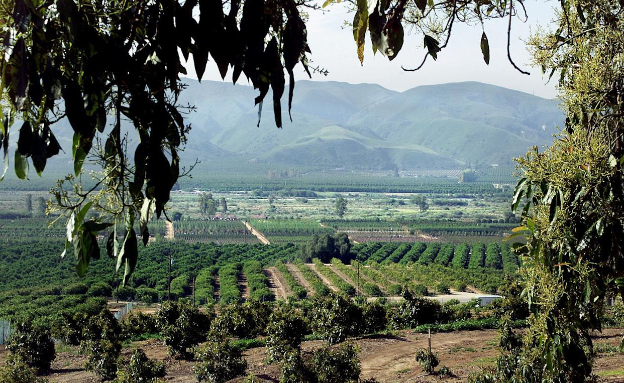 A view of Ventura County's avocado and citrus orchards on a typical day, pre-fires. (Photo: Anne Cusack via Getty Images)