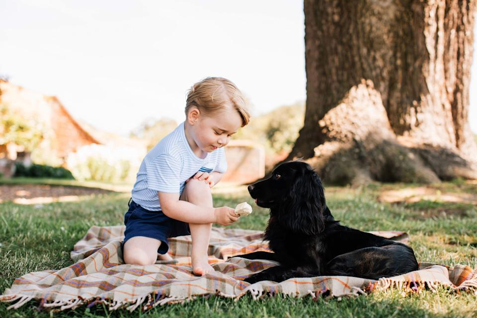 A photo released on July 22, 2016, by Prince William and Duchess Kate shows Prince George with Lupo at Sandringham in Norfolk.