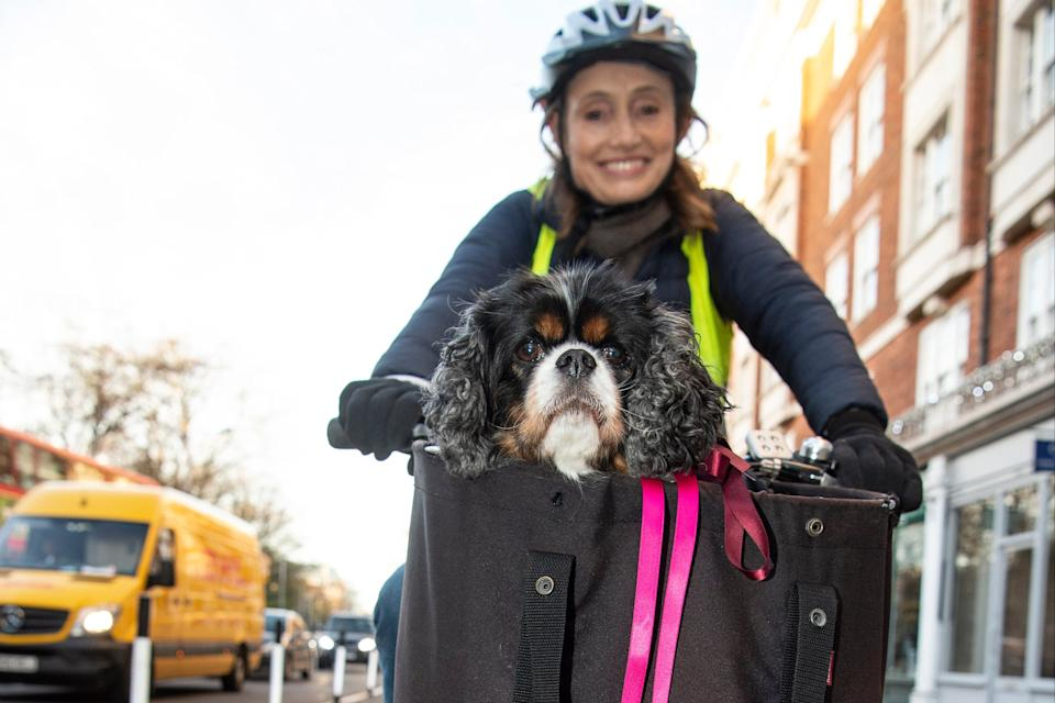<p>Tutor Sophie Russell, 53, rides to work in Kensington Square with her King Charles Spaniel Flossie in the basket.</p>Daniel Hambury/Stella Pictures Ltd