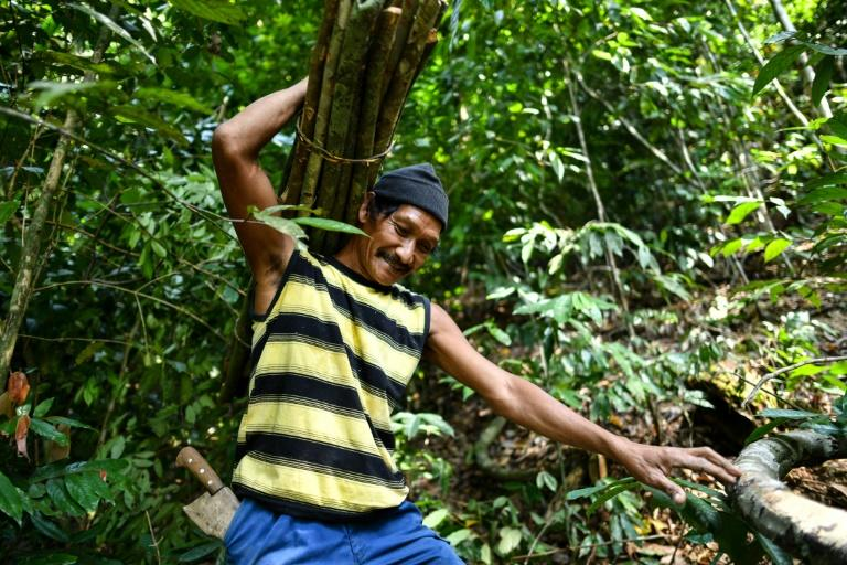 Traditional honey-hunter Abdul Samad Ahmad carries wood to make ladders for harvesting bee nests in the treetops