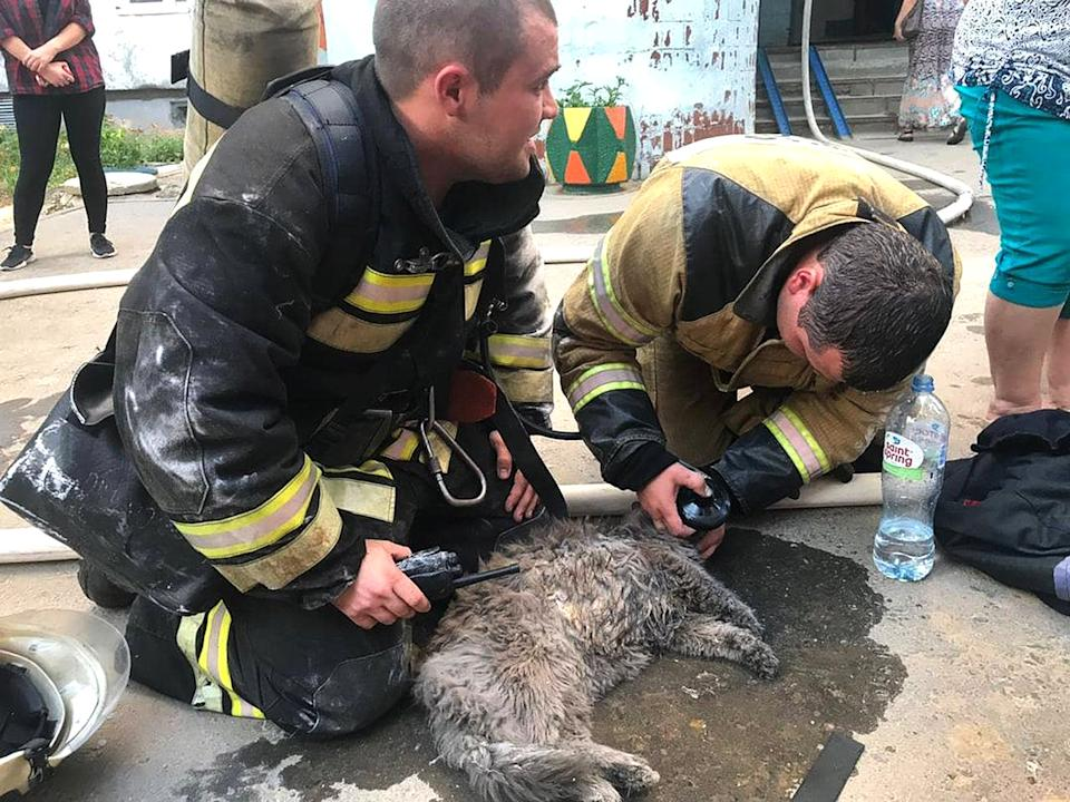 Two firefighters tend to Muryonka the cat by giving it oxygen.