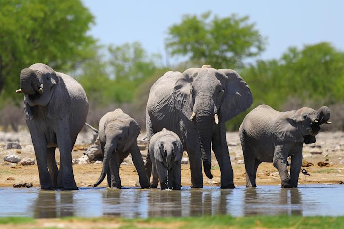 Elephants cool off at the Aus water hole near the Halali rest camp. Many herds gather at the water hole all day long, offering great photo opportunities here and on the main road leading in. (Photo: Gordon Donovan/Yahoo News)