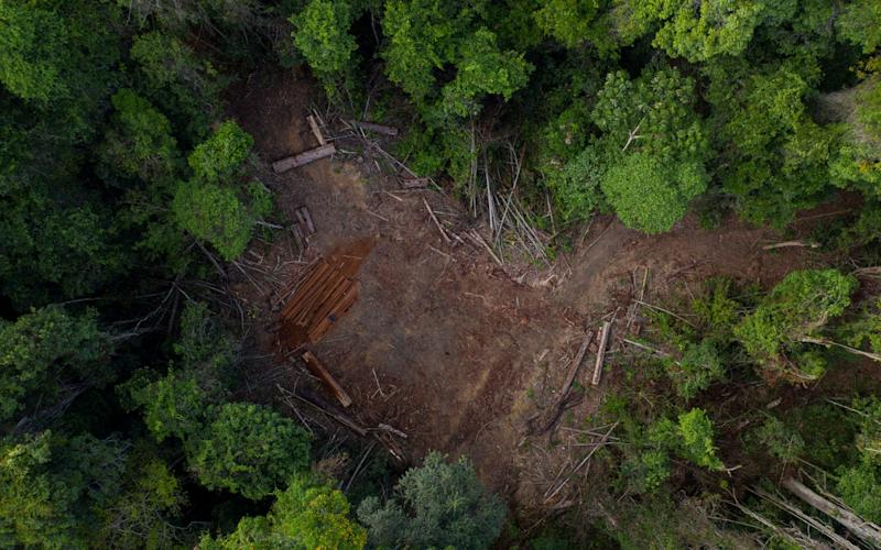 Amazon deforestation hits new high - AP