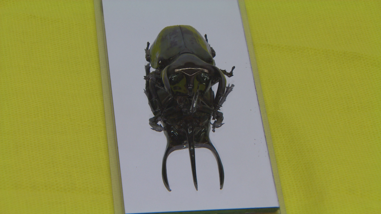 A designer's quest for people to see insects as pets or human food