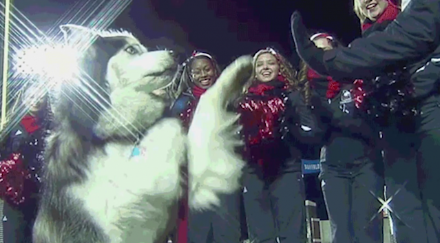 Diesel was NIU's mascot for nine years.