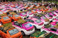 Vegetable gardens are seen on the roofs of taxis currently out of service due to the downturn in business in Bangkok (AFP/Jack TAYLOR)