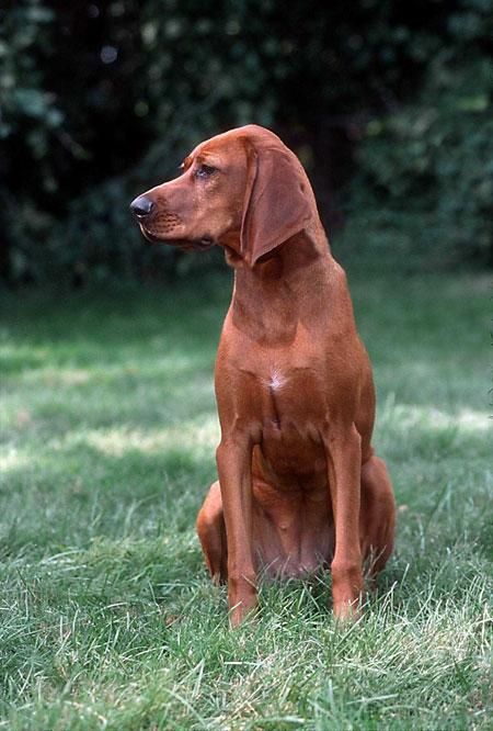Official Nc Dog Breed
