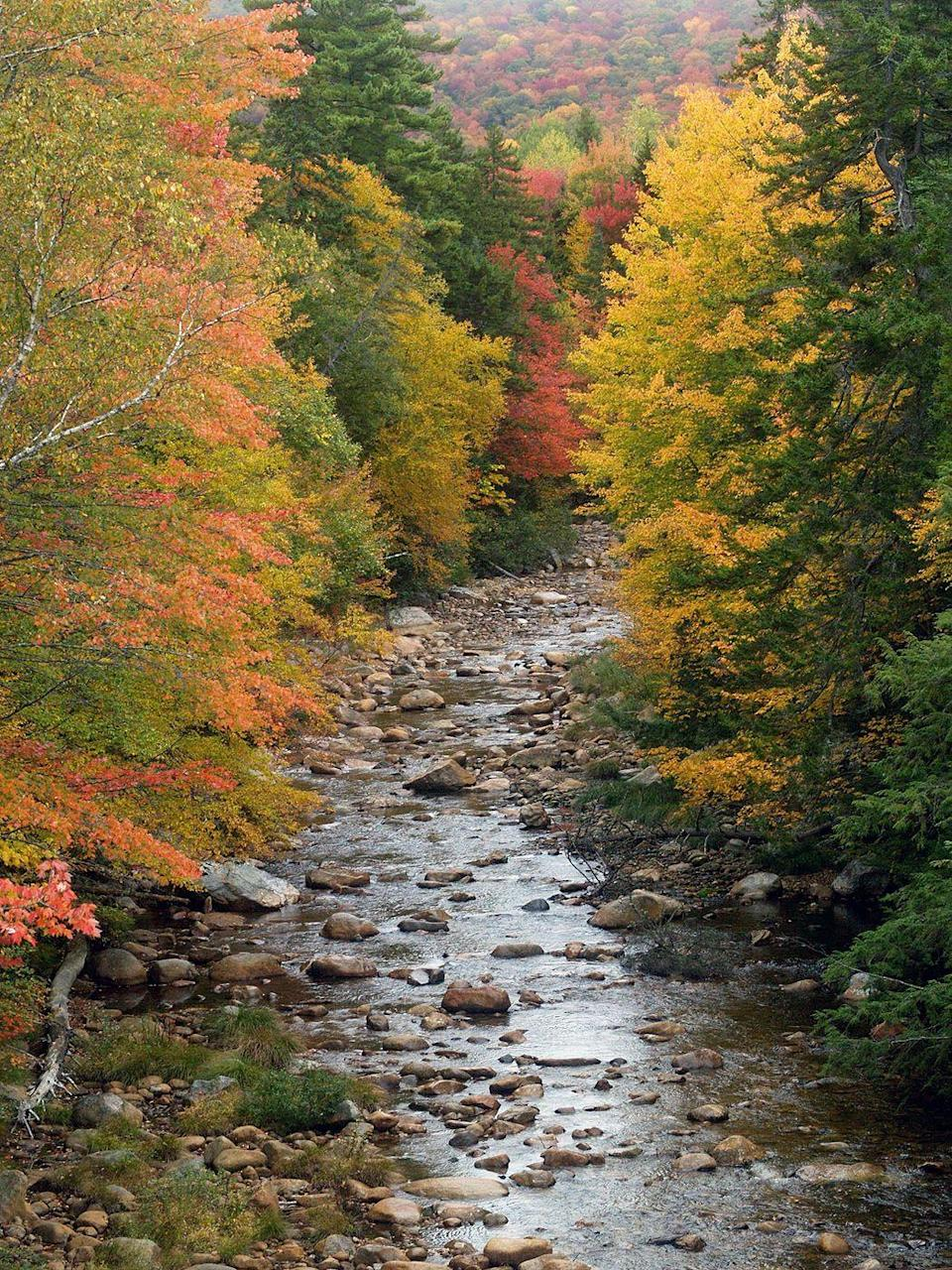 """<p><strong>The Drive: </strong><a href=""""https://www.tripadvisor.com/Attraction_Review-g46186-d104262-Reviews-Kancamagus_Highway-North_Conway_Conway_New_Hampshire.html"""" rel=""""nofollow noopener"""" target=""""_blank"""" data-ylk=""""slk:Kancamagus Scenic Byway"""" class=""""link rapid-noclick-resp"""">Kancamagus Scenic Byway</a></p><p><strong>The Scene: </strong>The best place to begin your drive on the """"Kanc"""" is in <a href=""""https://www.tripadvisor.com/Tourism-g46140-Lincoln_New_Hampshire-Vacations.html"""" rel=""""nofollow noopener"""" target=""""_blank"""" data-ylk=""""slk:Lincoln"""" class=""""link rapid-noclick-resp"""">Lincoln</a>, where you'll follow the twists and turns to an elevation of just under 3,000 feet before descending to the town of <a href=""""https://www.tripadvisor.com/Tourism-g46054-Conway_New_Hampshire-Vacations.html"""" rel=""""nofollow noopener"""" target=""""_blank"""" data-ylk=""""slk:Conway"""" class=""""link rapid-noclick-resp"""">Conway</a>. Along the way, you'll be surrounded by nature in the heart of the <a href=""""https://www.tripadvisor.com/Attraction_Review-g28950-d106625-Reviews-White_Mountain_National_Forest-New_Hampshire.html"""" rel=""""nofollow noopener"""" target=""""_blank"""" data-ylk=""""slk:White Mountain National Forest"""" class=""""link rapid-noclick-resp"""">White Mountain National Forest</a>, filled with scenic overlooks. </p><p><strong>The Pit-Stop: </strong>Stop to hike through the trees and rivers of the <a href=""""https://www.tripadvisor.com/Tourism-g659478-White_Mountains_New_Hampshire-Vacations.html"""" rel=""""nofollow noopener"""" target=""""_blank"""" data-ylk=""""slk:White Mountains"""" class=""""link rapid-noclick-resp"""">White Mountains</a>.</p>"""